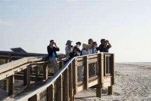Birding on St. George Island, Florida