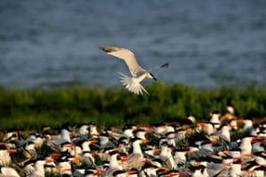 Flock of Birds on the Forgotten Coast