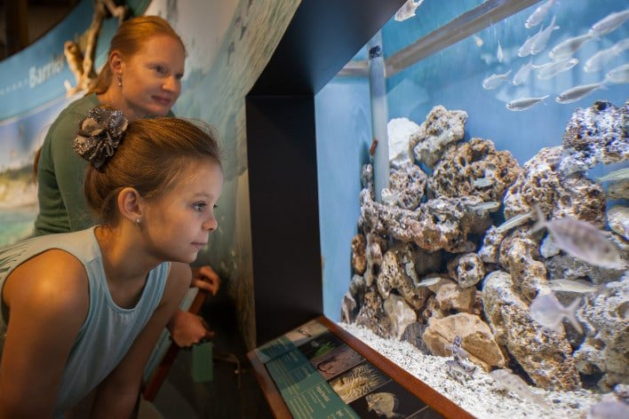 Young Girl Observing Fish Tanks