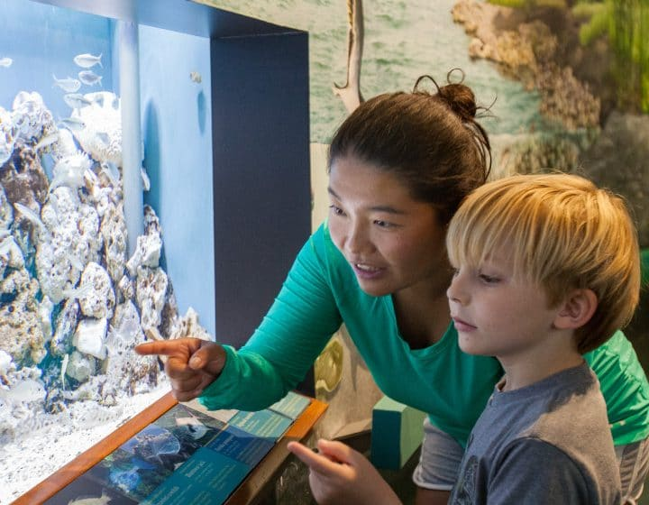 Woman showing child the marine life at the Nature Center in Eastpoint