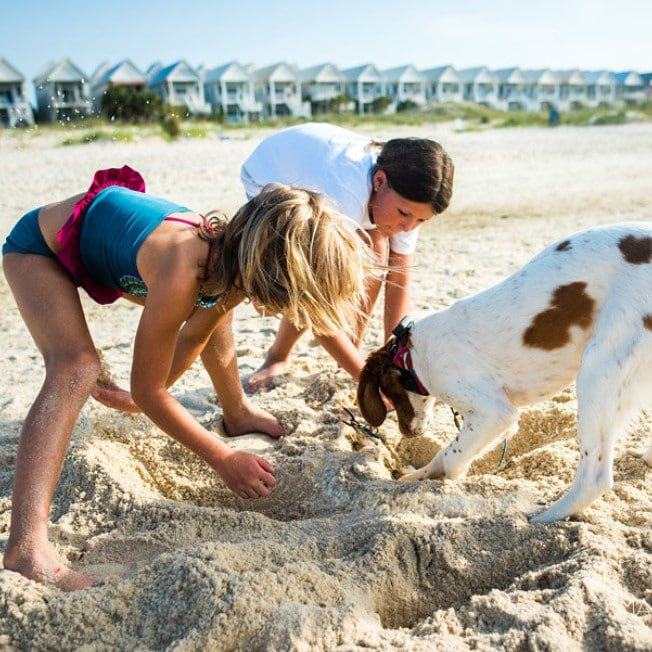 Kids and dog playing on the beach