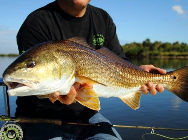 Redfish caught on Florida's Forgotten Coast