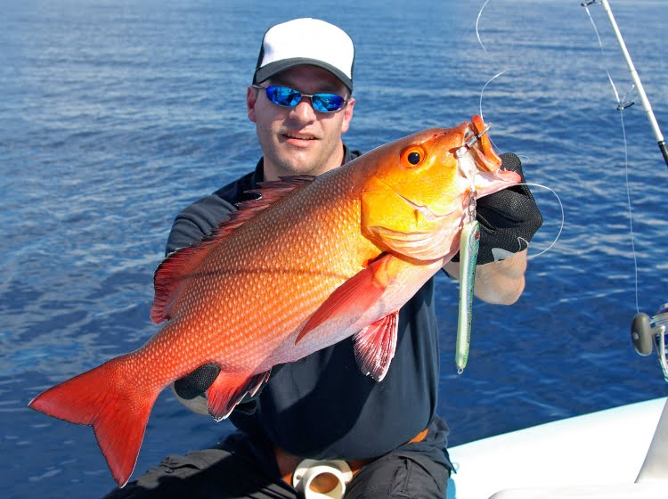 Snapper Round Up