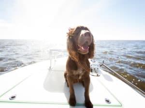 Happy Dog Boating