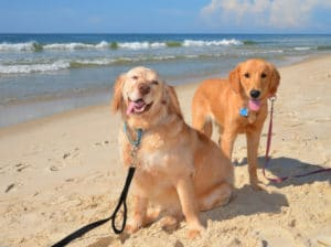 Happy dogs enjoying the beach