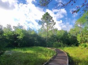 scipio creek boardwalk in Apalachicola