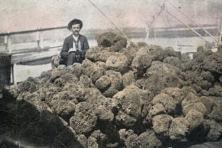 Carrabelle History Museum presents special exhibit on Sponge Diving in Carrabelle and North Florida
