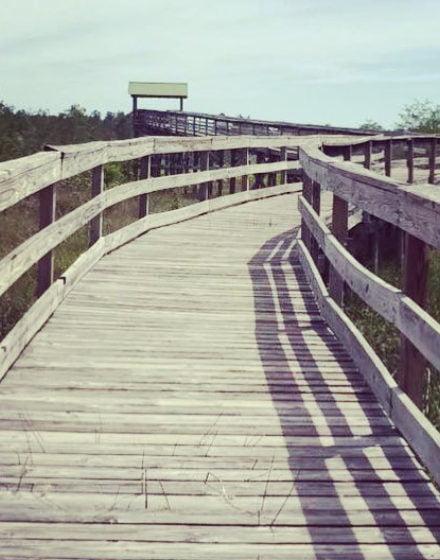 Boardwalk at Dwarf Cypress Forest